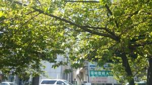 三浦海岸駅河津桜(葉桜)