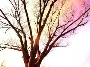 木とオーラのイメージ画像
