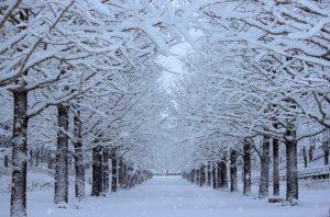 冬景色画像