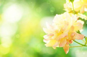 春イメージ画像