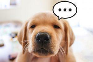 不満そうな犬の顔画像