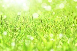 草風景写真