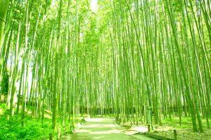 竹林※イメージ画像