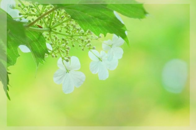 新緑イメージ画像