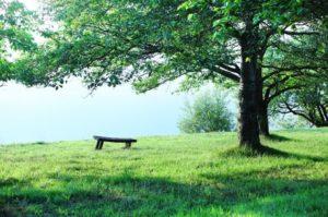 大樹の写真